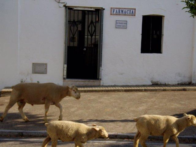 Fachada De La Farmacia De El Madroño, El Municipio Más Pequeño De Sevilla