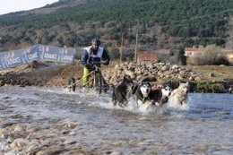 Un Corredor En El Campeonato De España De Trineos Con Perros