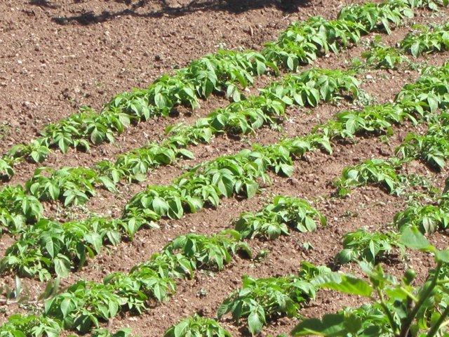 Más De 45.000 Agricultores Se Verán Beneficiados