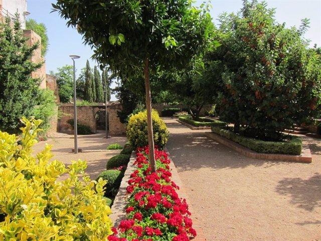 Parque, Jardín, Primavera, Alergia