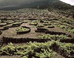 La Geria (Lanzarote)