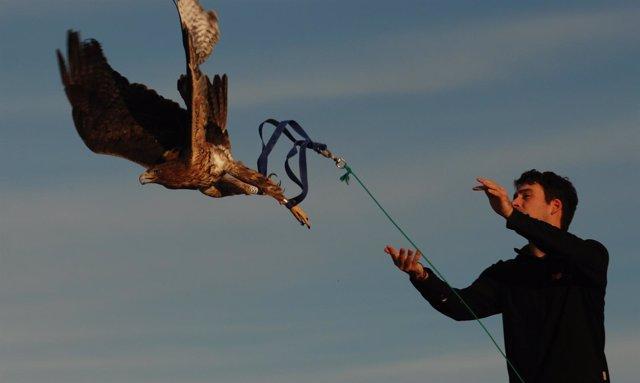 Imagen De La Liberación De Las Águilas Cuabarradas.