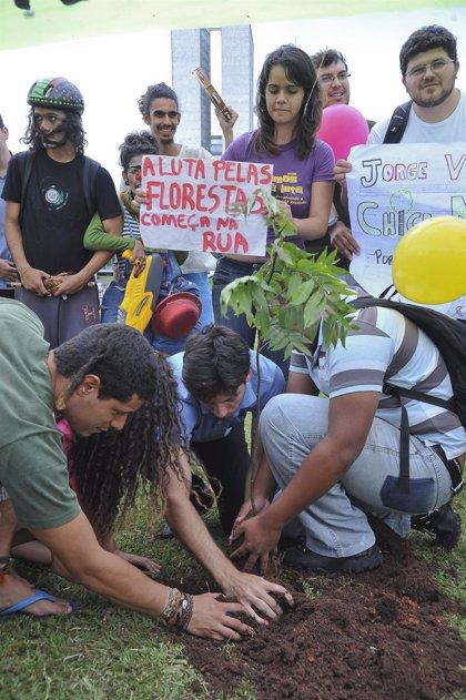 Brasil.- Miembros de Greenpeace se manifiestan frente al Congreso contra la reforma del Código Forestal