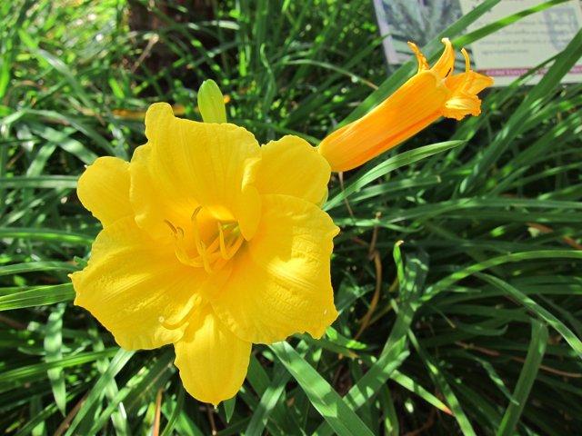 Primavera, Alergia, Flores