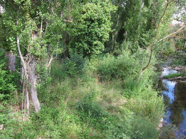 Río, Vegetación De Rivera, Bosque, Naturaleza