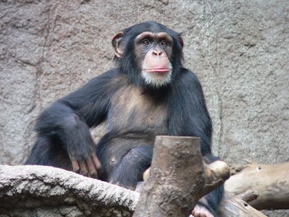 Una nueva vacuna ofrece protección parcial frente al VIH en monos