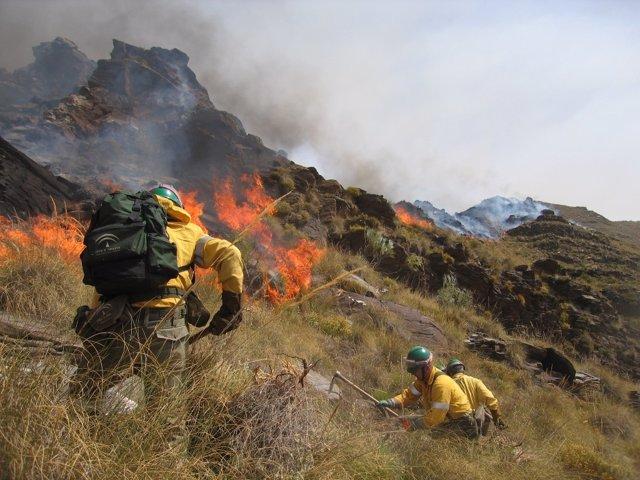 Dispositivo del Infoca trabajan en un incendio
