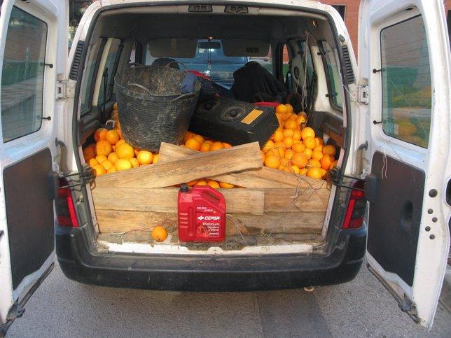 Naranjas Recuperadas Por La Guardia Civil En Almussafes