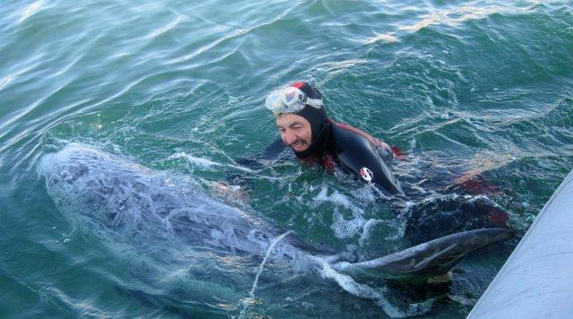 Un Momento Del Rescate Del Delfín Gris Calderón