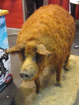 Cerdo Mangalica.