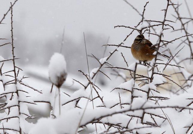 Temporal De Nieve, Frío, Viento Y Olas En España