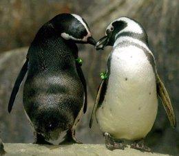 """Dos Pingüinos """"Enamorados"""""""