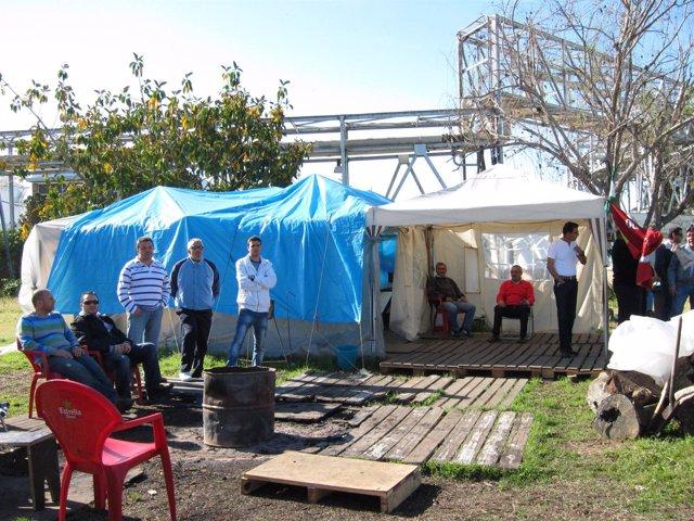 Trabajadores De Foret Acampados.