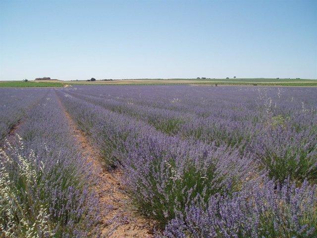 Nuevo Curso De Ruralcaja Sobre Plantas Aromáticas