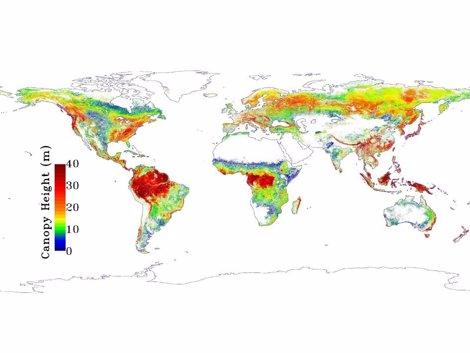Bosques En La Tierra