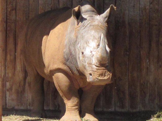 Rinoceronte En El Parque De Cabárceno