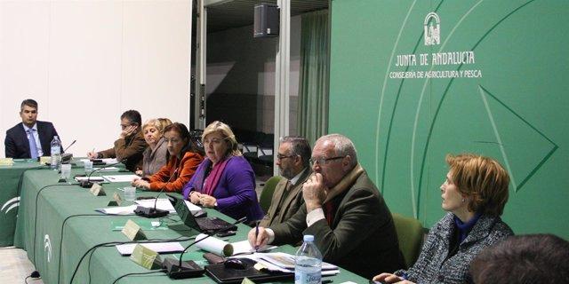 Consejo Social Del Ifapa