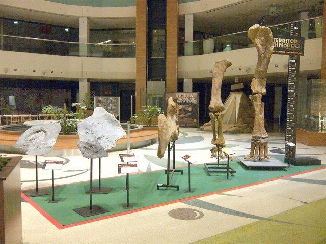 Sala Del Parque Paleontológico Dinópolis.