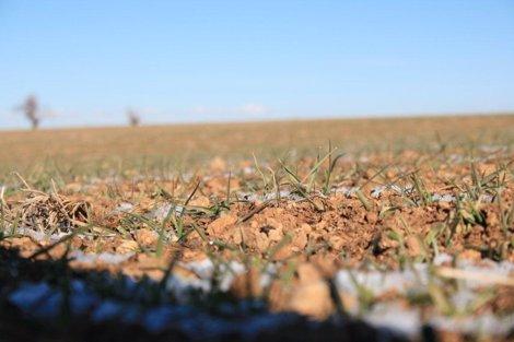 Brotes, Sequía, Campo, Agricultura