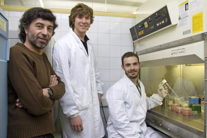 Diseñan una molécula sintética que inhibe la formación de tumores