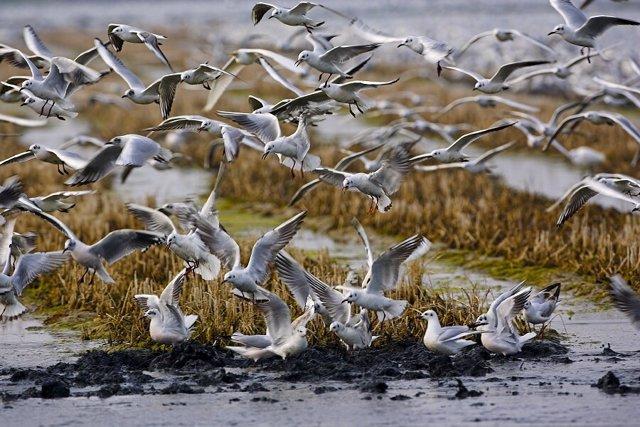 Aves Acuáticas En El Delta Del Ebro. Pájaro, Pájaros, Ave.