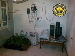 Marihuana Intervenida Por La Policía Local En Un Domicilio De Valencia