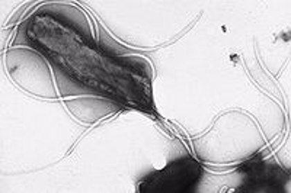Hallan una asociación entre la bacteria 'H. pylori' y la diabetes tipo 2