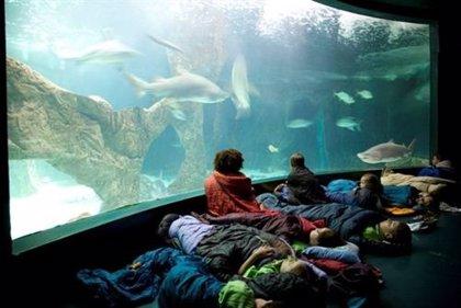 Una gran familia de dinosaurios visitará el Zoo Aquarium con motivo de los campamentos del zoológico en Semana Santa
