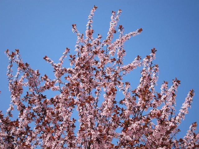 Árbol Florido, Primavera, Flores, Buen Tiempo