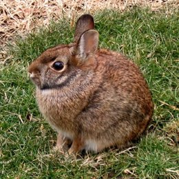 Un Conejo