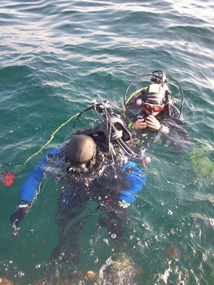 El CSIC estudia la reproducción de cefalópodos de interés comercial en Islas Atlánticas e inicia muestreos en Cíes