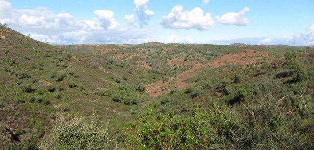 Montes Públicos En La Provincia De Sevilla