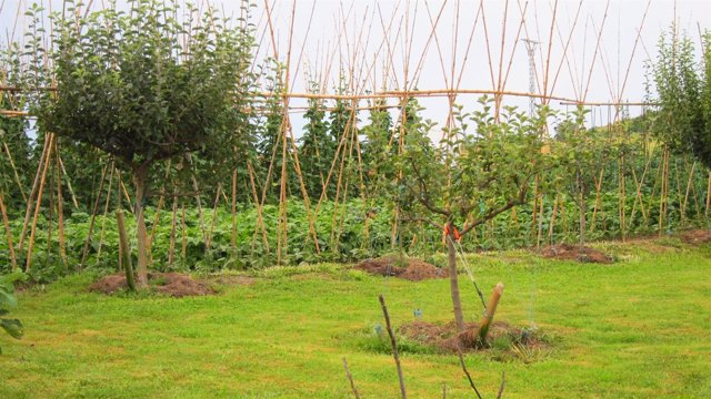 Huerto, Cultivos, Agricultura