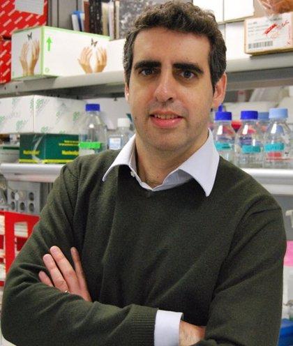 Cataluña.- Manel Esteller, académico electo de la Real Academia de Medicina de Cataluña