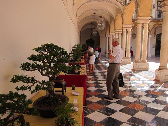 Exposición De Bonsái En La Diputación