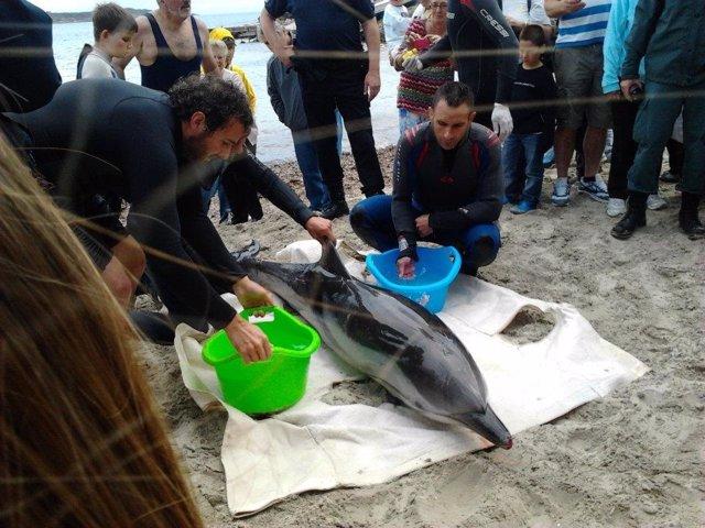 Uno De Los Delfines Varados En La Costa De Mallorca