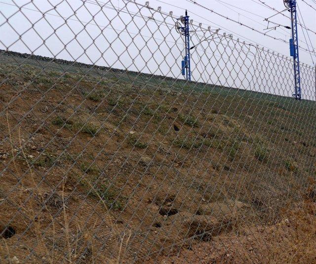 Madrigueras Y Conejos Atrapados En El Vallado De Vías De AVE