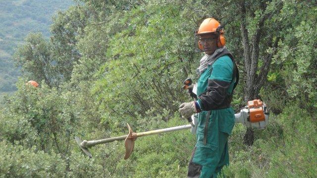 Endesa Limpia Una Zona Cerca Del Tendido Eléctrico En Camarasa