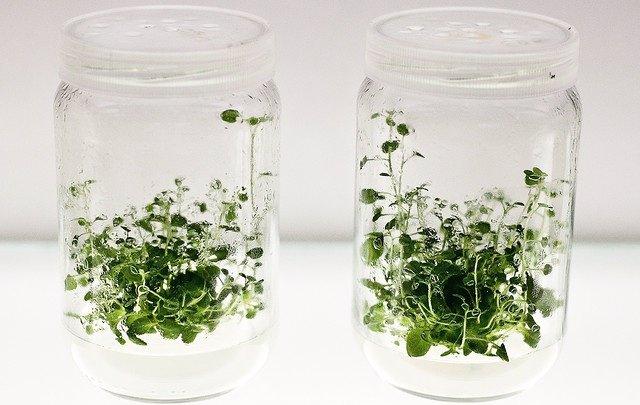 Verde, Plantas, Cosmética