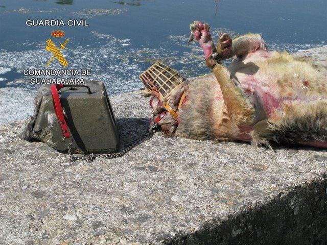 Maltrato Perro