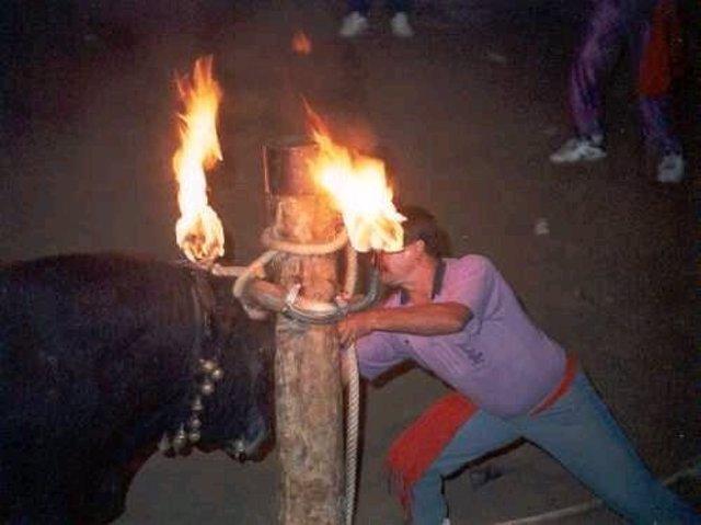 Toro Embolado/ Bou Embolat/ Toro De Fuego/ Maltrato Animal