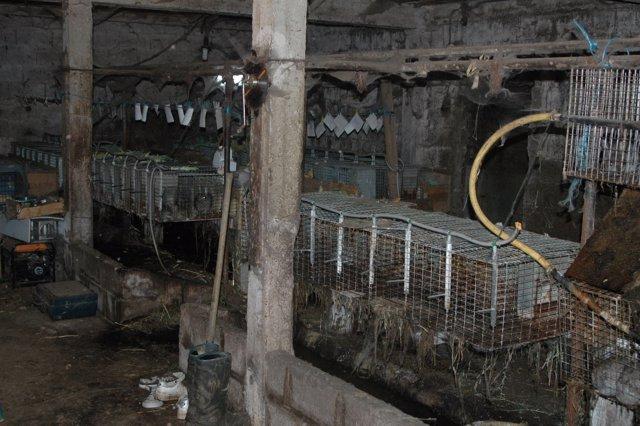 Granja ilegal de conejos en Galicia