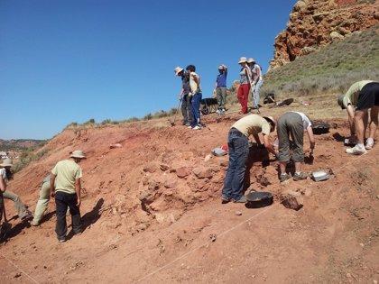 Alumnos de la UCLM localizan en una excavación lo que podría ser parte de la muralla del Castillo de Montiel