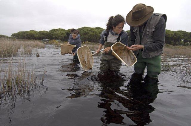 Investigación En Doñana.
