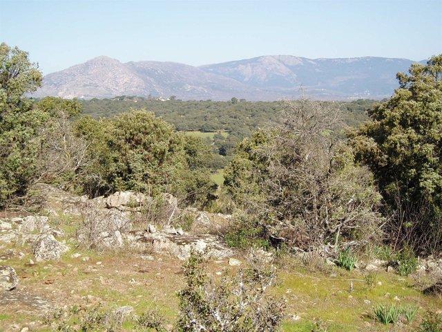 Monte de Valdemorillo