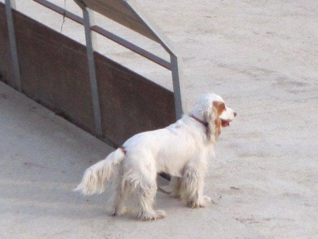 En Aragón Hay 96.500 Perros Censados