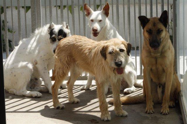Perros en Adopción