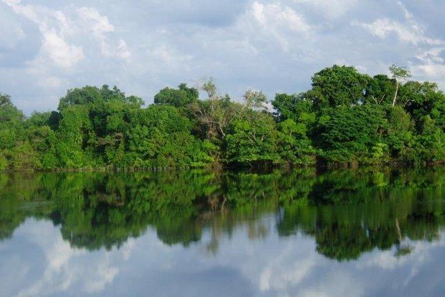Bosque Tropical En Manaos (Brasil). Selva Amazónica