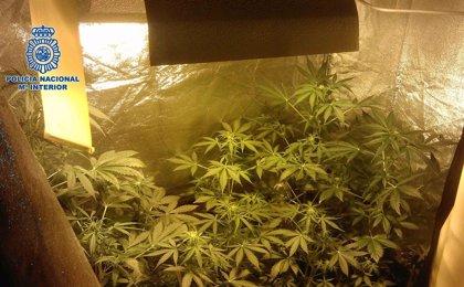La Generalitat encarga a una comisión estudiar la regulación del autoconsumo de cannabis