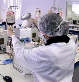 Criocord, células madre de cordón umbilical